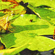 Frog On Lily Pad Poster