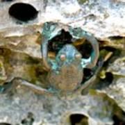 Frog Sculpture Poster
