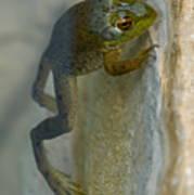Frog Swim Poster