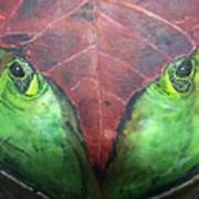 Frog With Leaf Poster