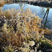 Frost Along Nippersink Creek In Glacial Park At Sunrise Poster