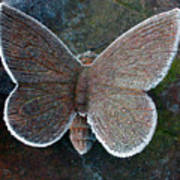 Frosted Butterfly Poster by Kathy DesJardins