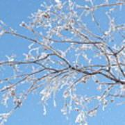 Frosty Branch Poster