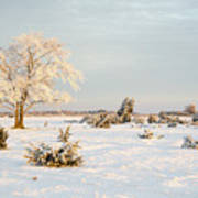 Frosty Solitude Tree In The First Morning Sunshine Poster
