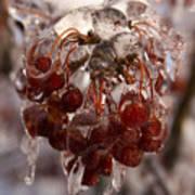 Frozen Berries Poster