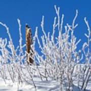 Frozen Fence Post Poster