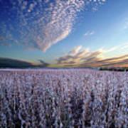 Frozen Fields Poster