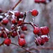 Frozen Fruit Poster