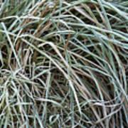 Frozen Grass - Ground Frost Poster