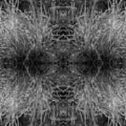 Frozen Grass Abstract In Bw Poster