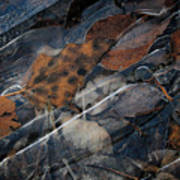 Frozen Leaves In Fall Poster