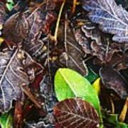 Frozen Oak Leaves, Glenveagh National Poster