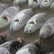 Frozen Tuna Fish At The Tsukiji Poster