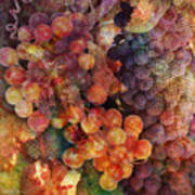 Fruit Of The Vine Poster by Barbara Berney