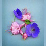 Fuchsia And Cranesbill Poster
