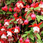 Fuchsia Pastel Poster