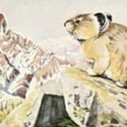 Fuertes, Louis Agassiz 1874-1927 - Burgess Animal Book For Children 1920 Pika Poster