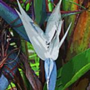 Full Bird Poster