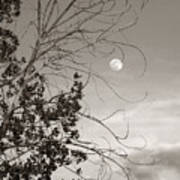 Full Moon Behind Cottonwood Tree Poster