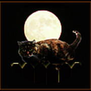 Full Moon Cat Poster