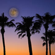 Full Moon Palm Tree Sunset Poster