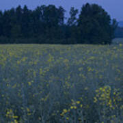 Full Moon Setting Over Rapeseed Field Poster