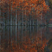 Full Of Glory - Cypress Trees In Autumn Poster