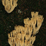 Fungi Grows Out Of A Fallen Log In An Poster