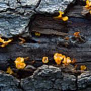 Fungi On Log Poster