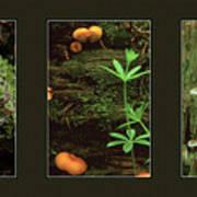 Fungi Times Three Poster
