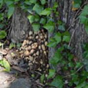 Fungus At Base Of Tree Poster