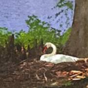 Furman University Swan Poster
