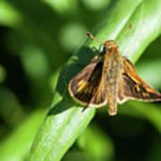 Fuzzy Moth Poster