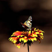 Gaillardia And Butterfly Poster