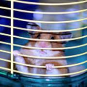Gangster Hamster Poster