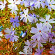 Flower Photography- Floral Art- Digital-floral Fireworks Poster