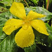 Garden Flower In Kwajalein Poster