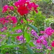 Garden In The Woods Poster
