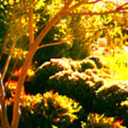 Garden Landscape On A Sunny Day Poster