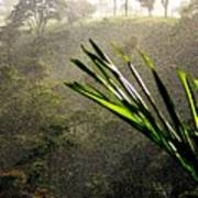 Garden Of Eden Rain Poster