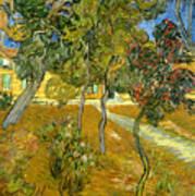 Garden Of Saint Paul's Hospital Poster by Vincent van Gogh