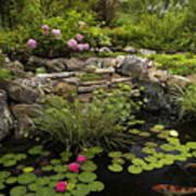 Garden Pond - D001133 Poster by Daniel Dempster