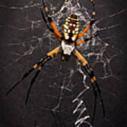 Garden Spider And Web Poster by Tamyra Ayles