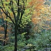 Garden Trees Poster