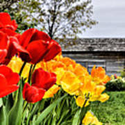 Garden Tulips On A Cloudy Day Poster