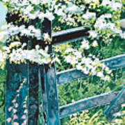 Gate And Blossom Poster