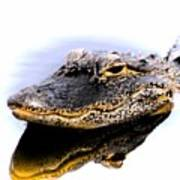 Gator Profile Reflection Poster