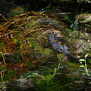 Gator Swamp Poster