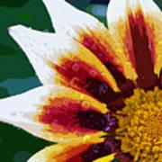 Gazania Flower Design Poster