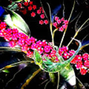 Gecko Berry Poster